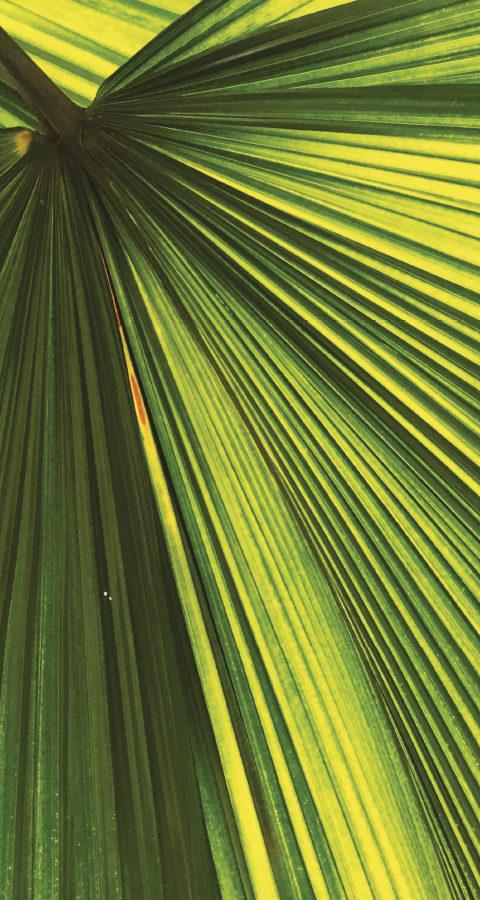 Arbres et Plantes Artificielles
